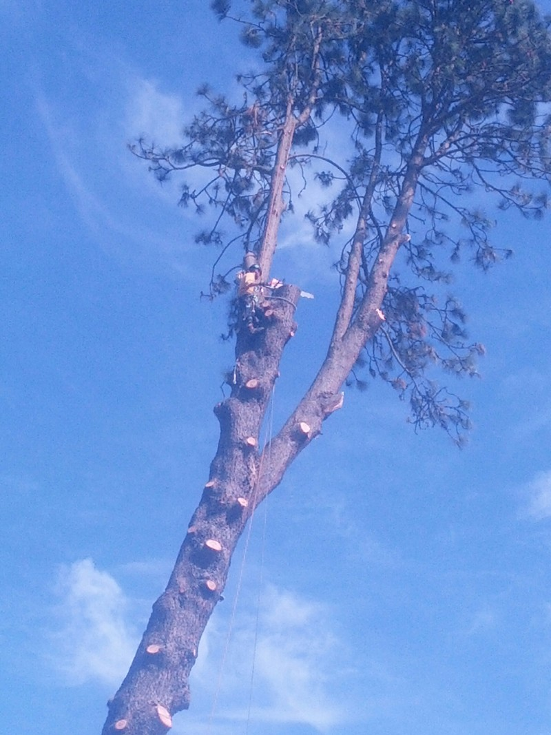 Commercial-Tree-Care-Enumclaw-WA