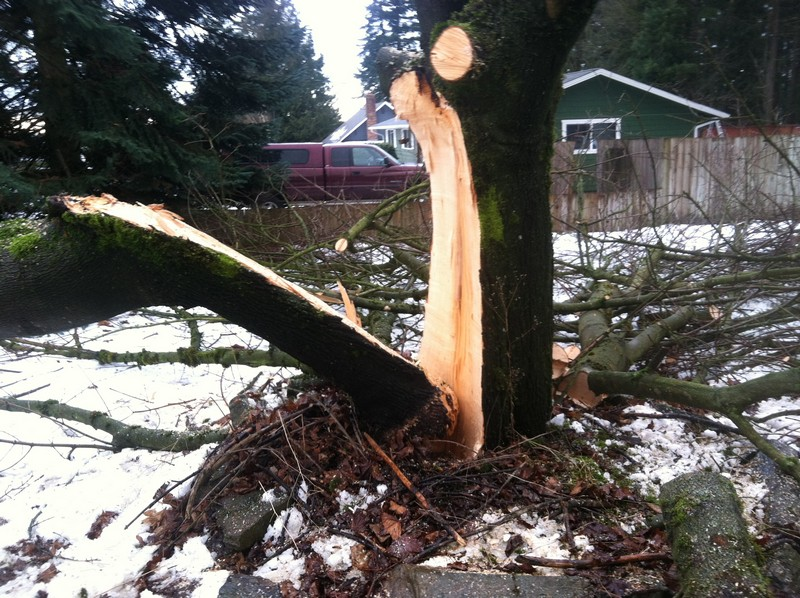 Downed-Tree-Removal-Enumclaw-WA
