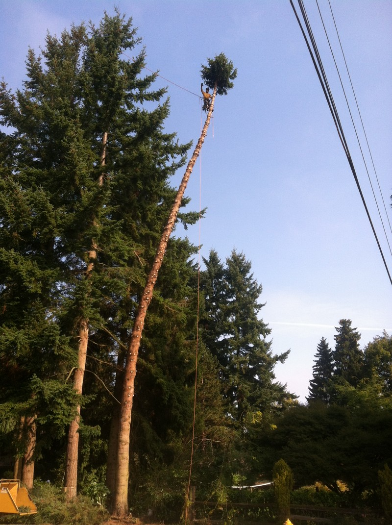 Home-Tree-Removal-Enumclaw-WA