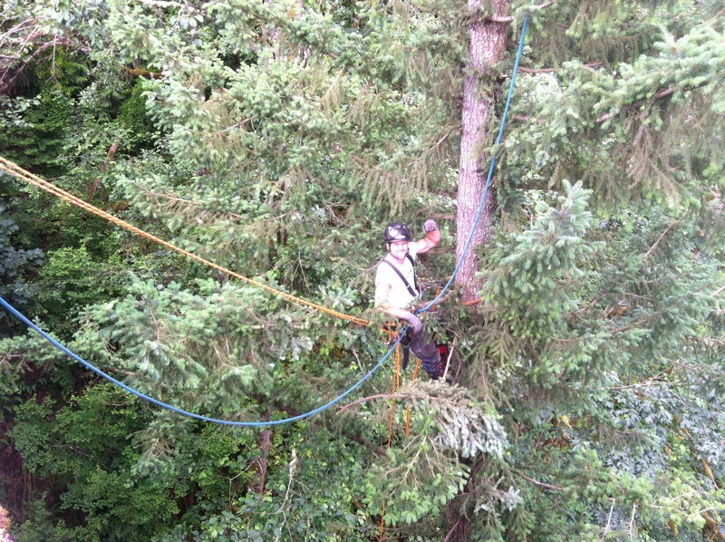 Low-to-No-Impact-Tree-Removal-Enumclaw-WA