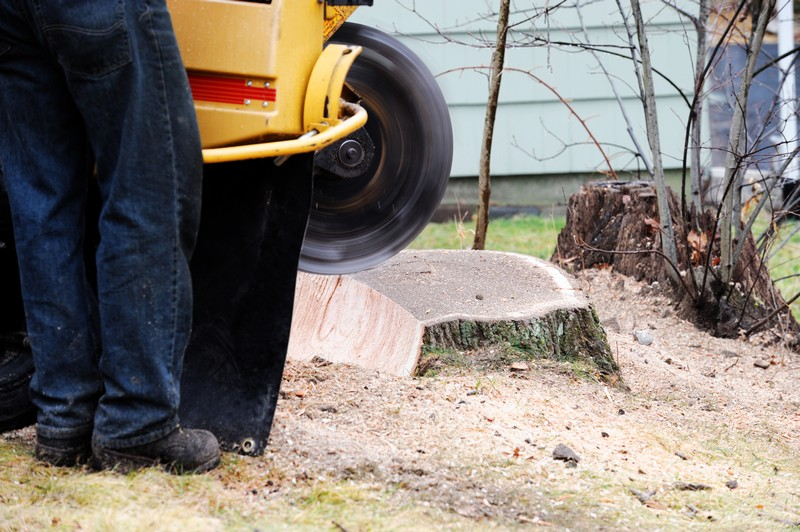 Stump-Grinding-Services-Enumclaw-WA