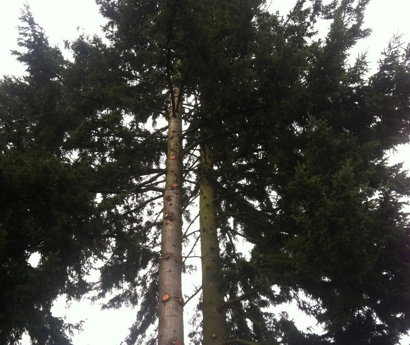 Tree-Pruning-Enumclaw-WA