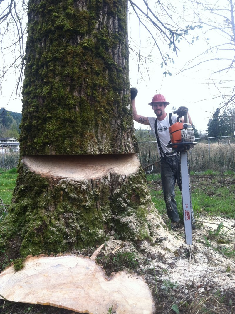 Tree-Removal-Enumclaw-WA