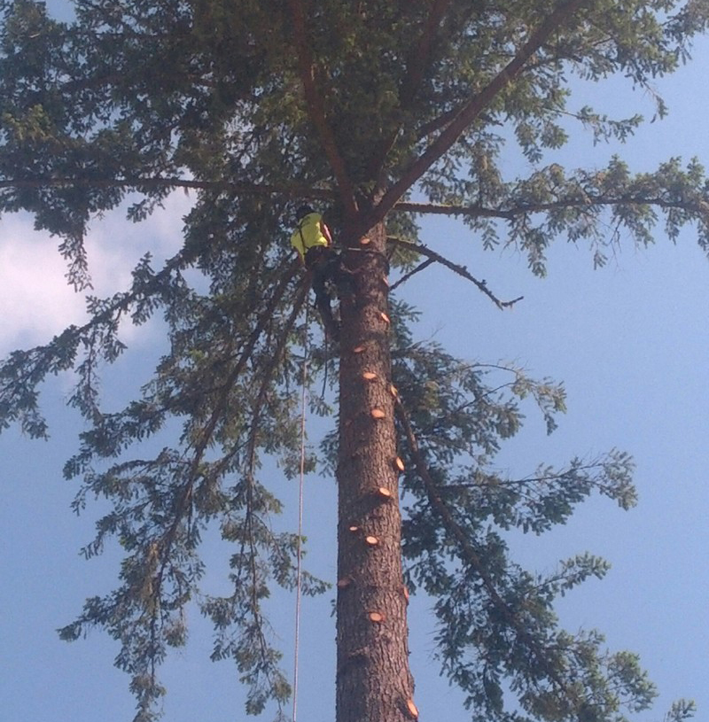 Tree-Trimming-Service-Enumclaw-WA